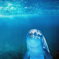 海底世界TD1.0.0正式版(附隐藏英雄密码攻略秘籍)
