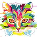 花猫视频播放器v1.0.0破解版