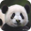 小喜小熊游戏区块链1.1最新版